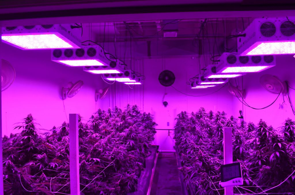 Grow Plants Indoors Now