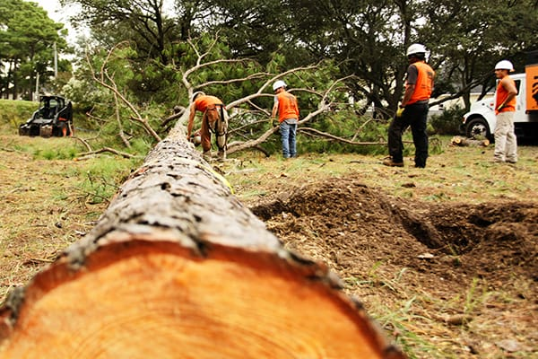 TreeQuote's Top Quality Tree Pruning Services